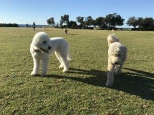 Marks Park | Timeshare Dog Park in Tamarama