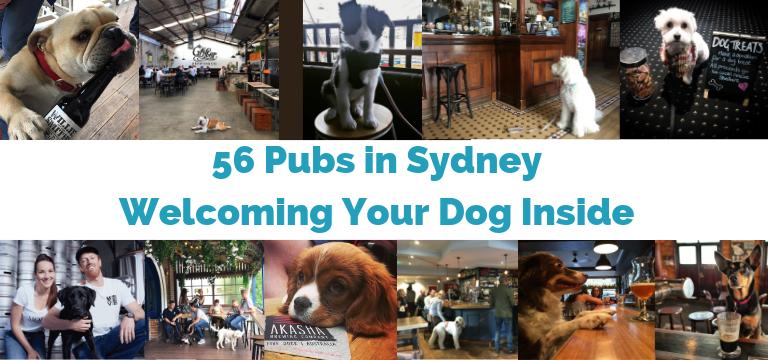 56 Pubs Sydney
