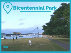 Dogs at Bicentennial Park
