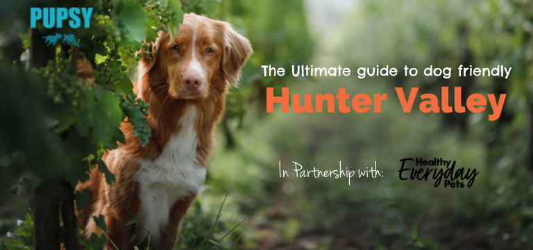 dog-friendly-hunter-valley-HEP