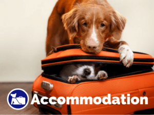 Dog friendly accommodation on Pupsy