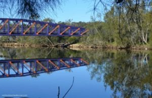 Narrabeen Lagoon Trail | Dog Walk in Narrabeen