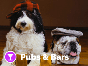 Dog friendly pubs/ bars on Pupsy