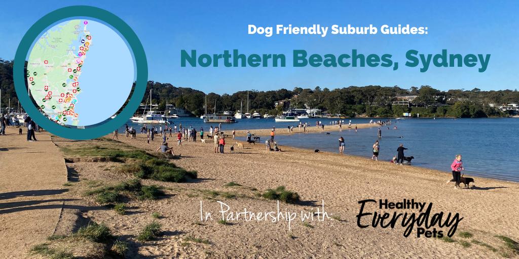 Dog-Friendly-Northern-Beaches-HEP