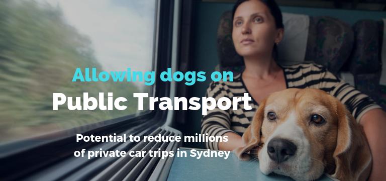 Public Transport Blog Main Image