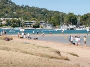 Rowland Reserve | 24h Dog Beach in Bayview