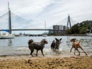 Bicentennial Park | 24h Dog Beach in Glebe