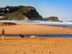 Avoca Beach | 24h Dog Beach in Avoca