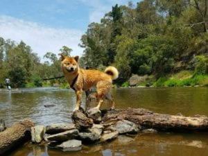 Warrandyte River Reserve | 24h Dog Park in Warrandyte