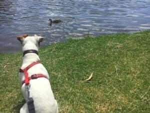 Birds Lands Reserve | Dog Friendly Walk in Belgrave Heights