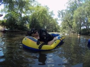 Riverwood Downs | Dog friendly Camping in Monkerai
