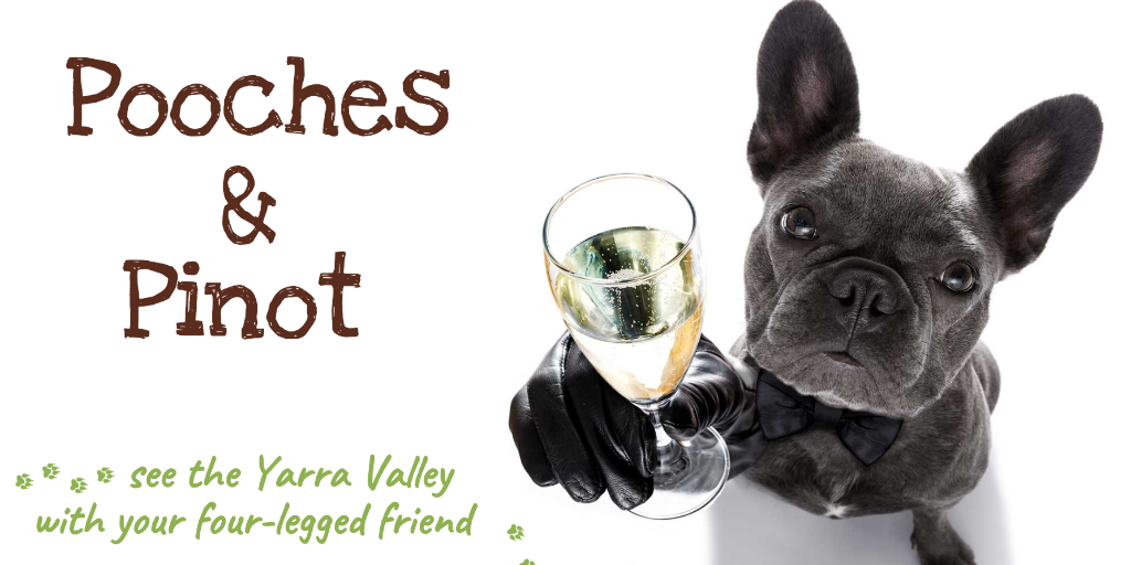 Ultimate Guide to Dog Friendly Yarra Valley | Pupsy