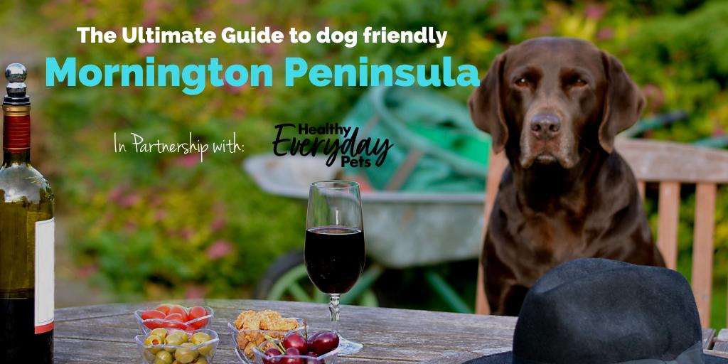 dog-friendly-mornington-peninsula-HEP