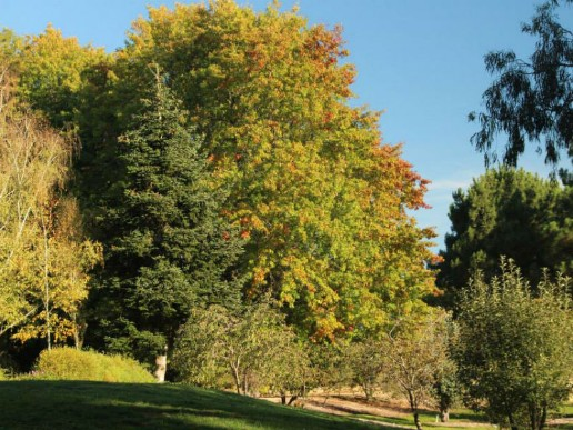 Orange-Botanic-Garden-2