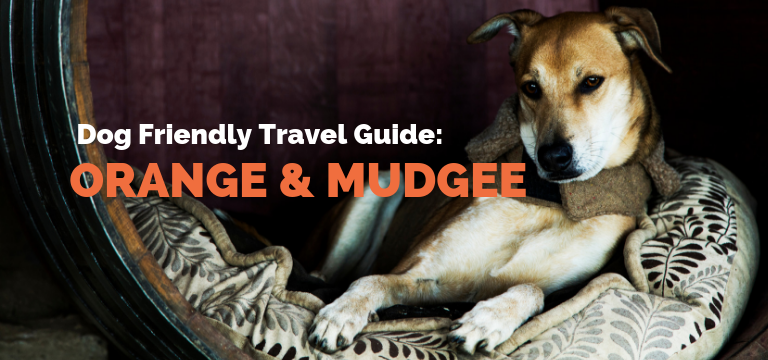 Dog Friendly Travel Guide: Orange & Mudgee