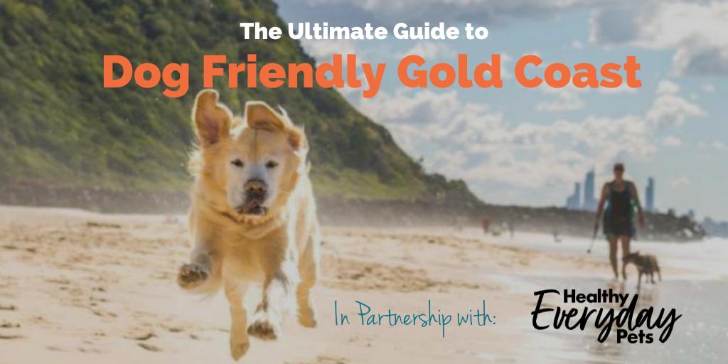 Dog-Friendly-Gold-Coast-HEP