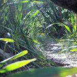 Strickland Falls Dog Friendly Hike 2 86 150x150