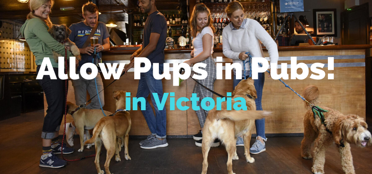 Allow Pups in Pubs in Victoria