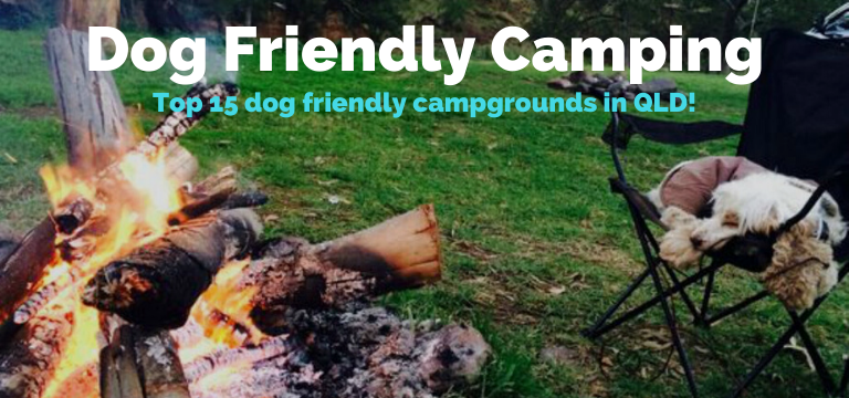 Top 15 Dog Friendly Camping in Queensland