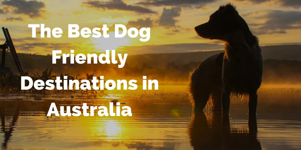 The Best Dog Friendly Destinations in Australia