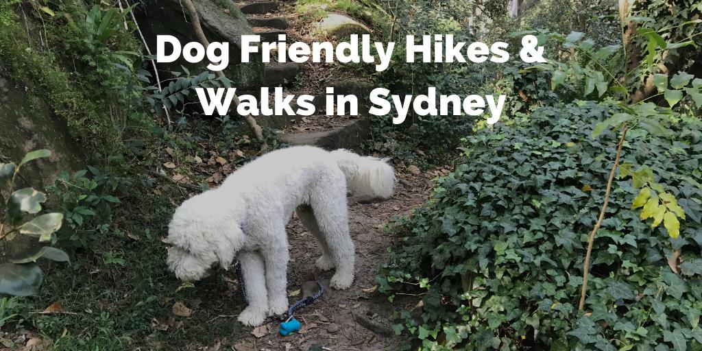 sydney-dog-walks