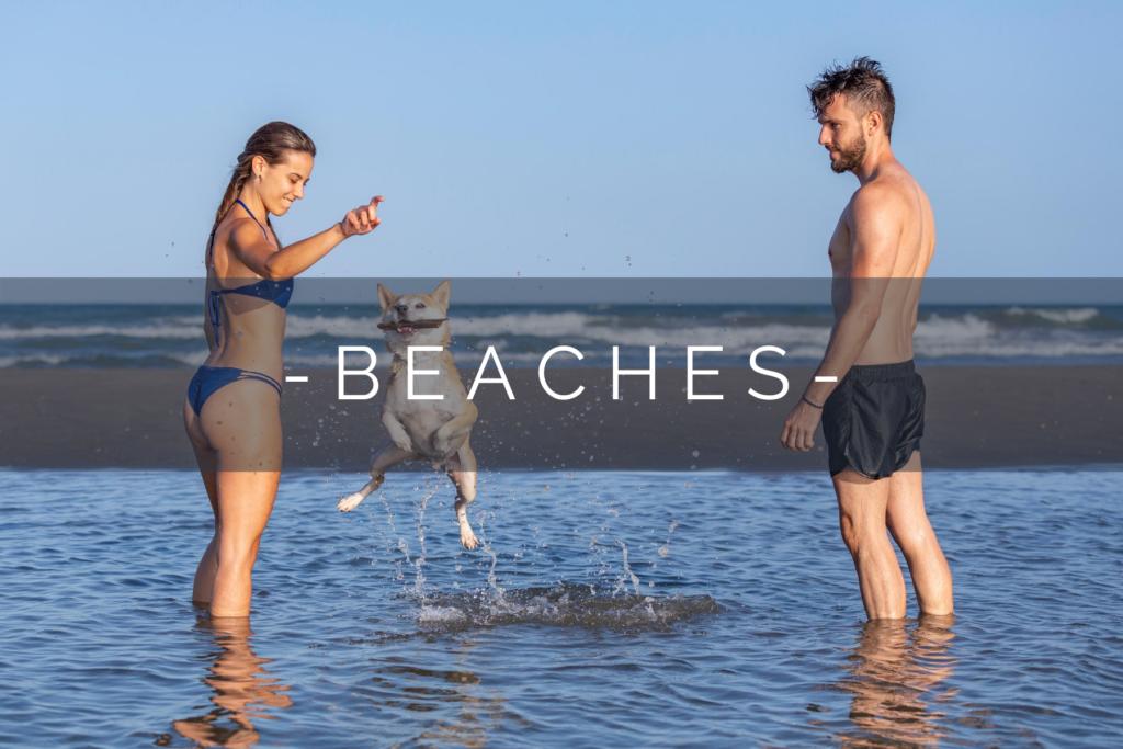 DOG-FRIENDLY-BEACHES-HOME