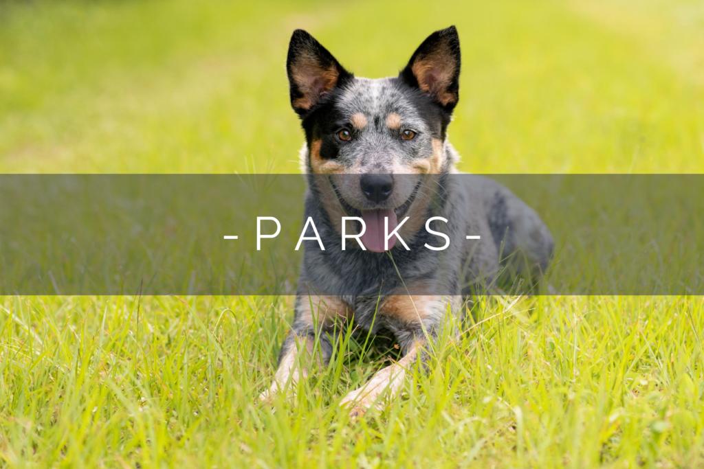 DOG-FRIENDLY-PARKS-HOME