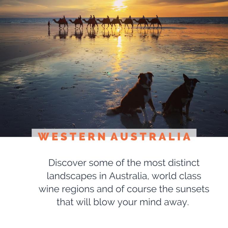 DOG-FRIENDLY-WESTERN-AUSTRALIA-2