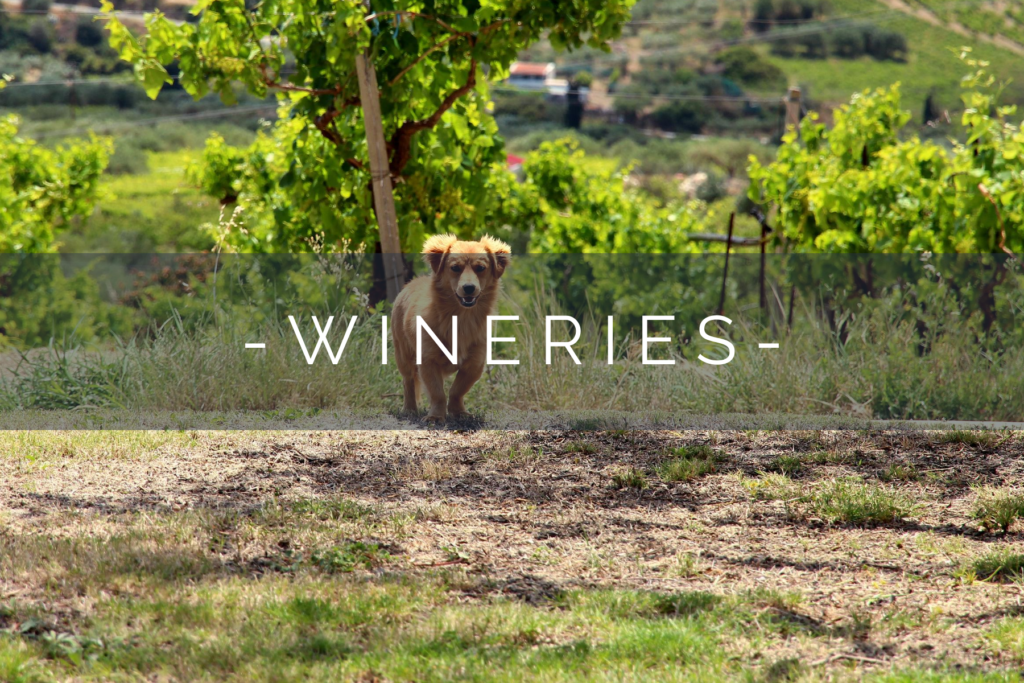 DOG-FRIENDLY-WINERIES-HOME
