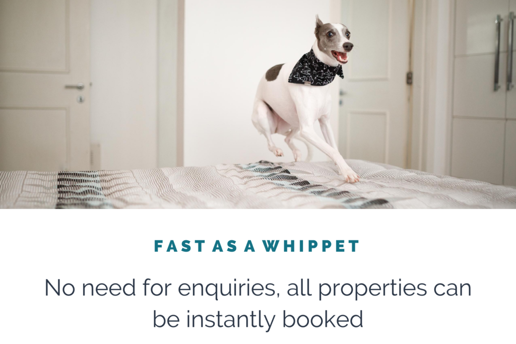 FAST-AS-A-WHIPPET