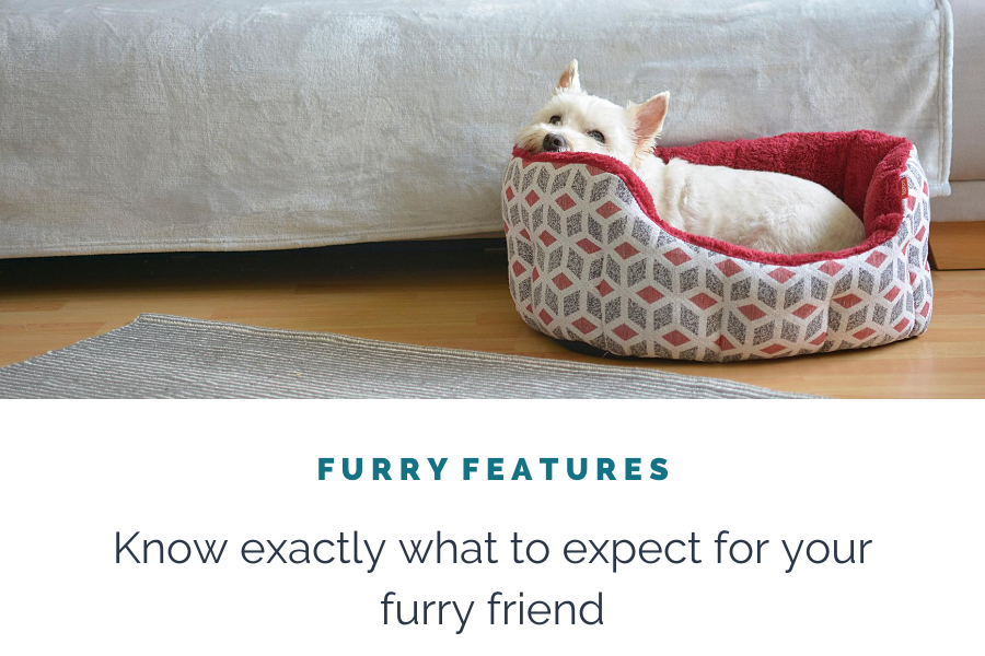 Furry Features