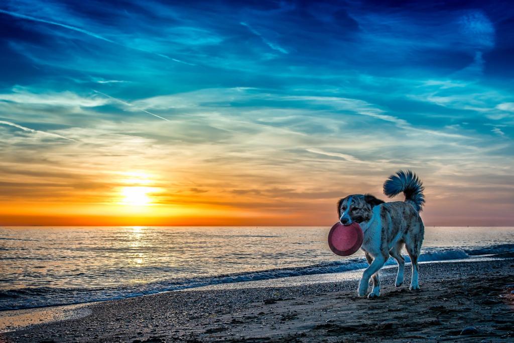 dog-friendly-destinations-hero-mobile