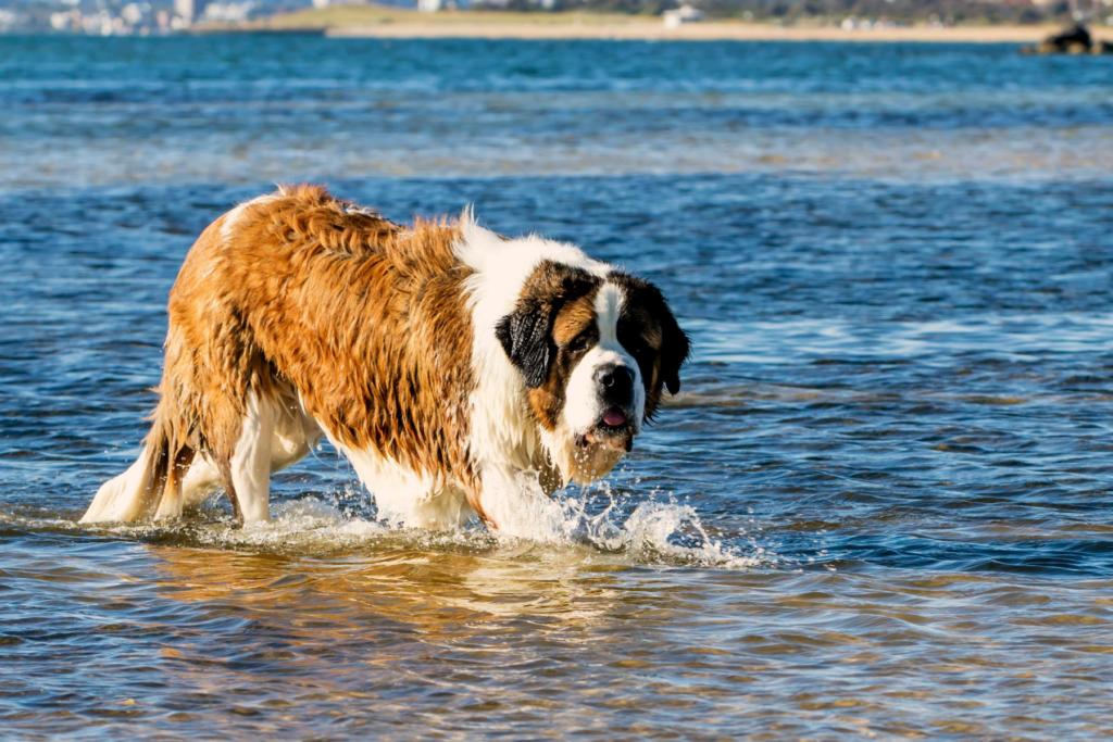 dog-friendly-gold-coast-hero-mobile