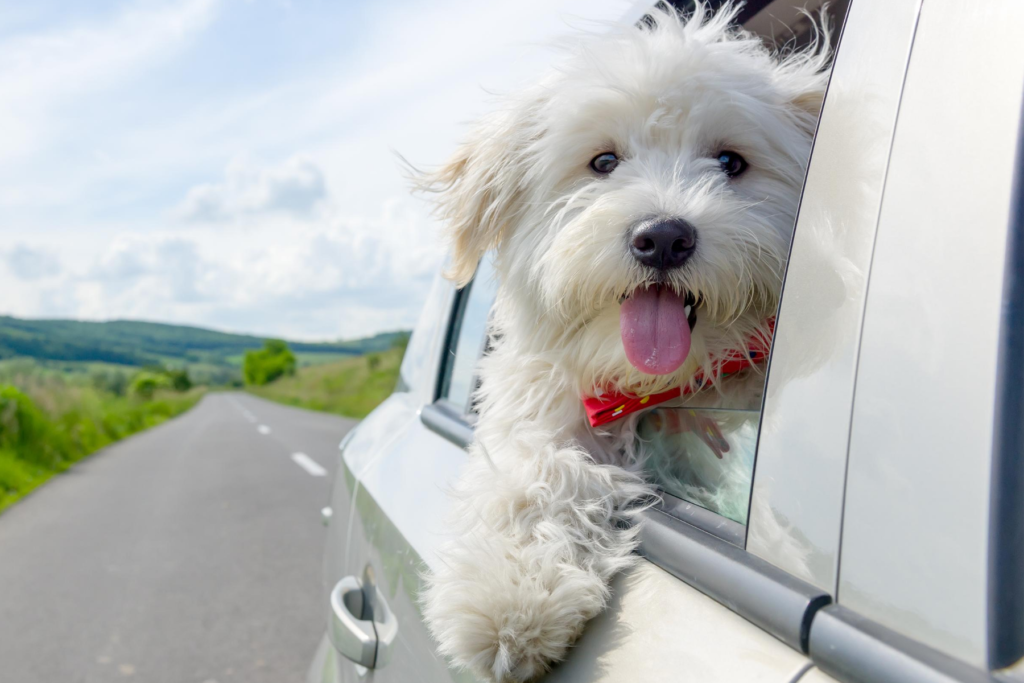 dog-friendly-great-ocean-road-hero-mobile
