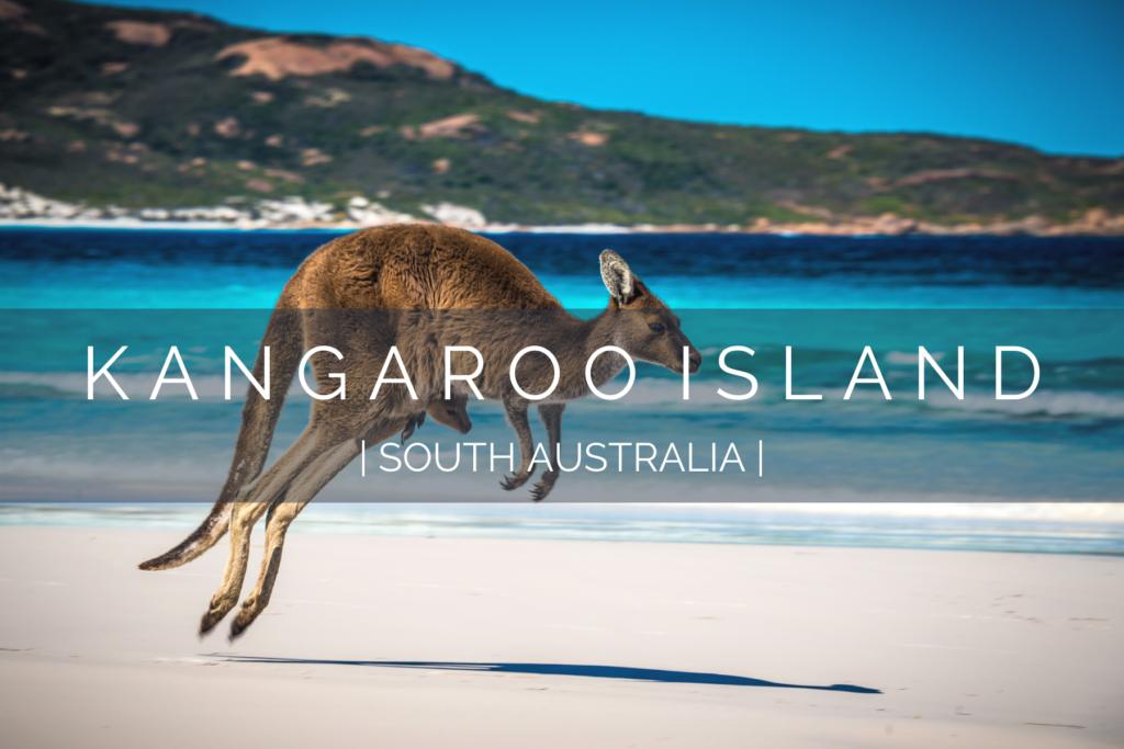 dog-friendly-kangaroo-island-2