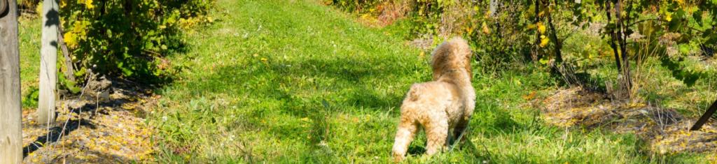 dog-friendly-margaret-river-hero
