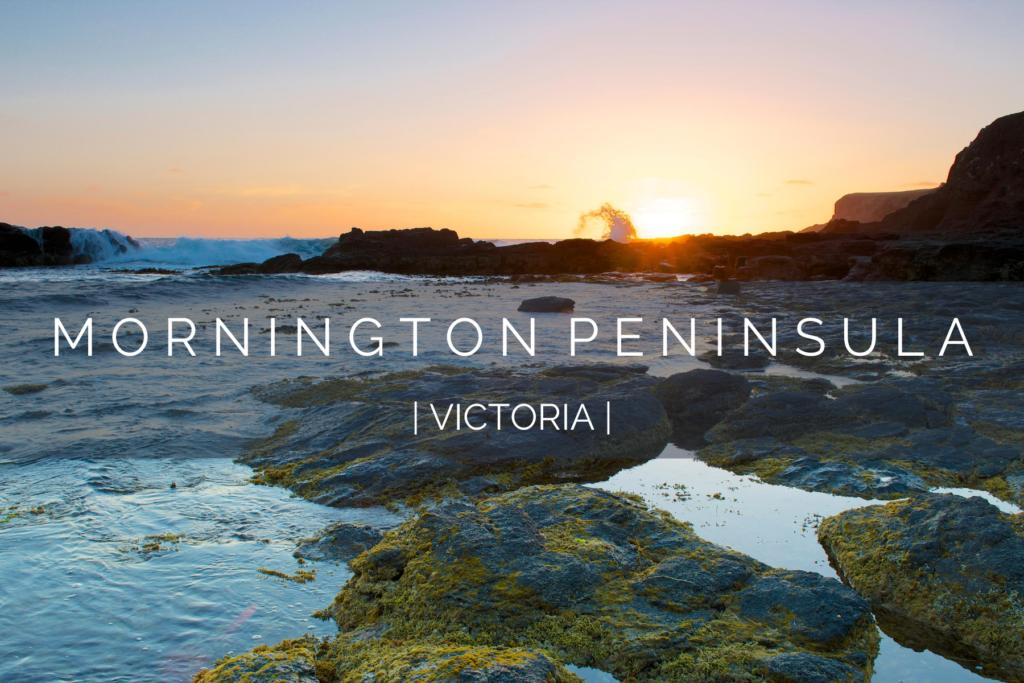 dog-friendly-mornington-peninsula