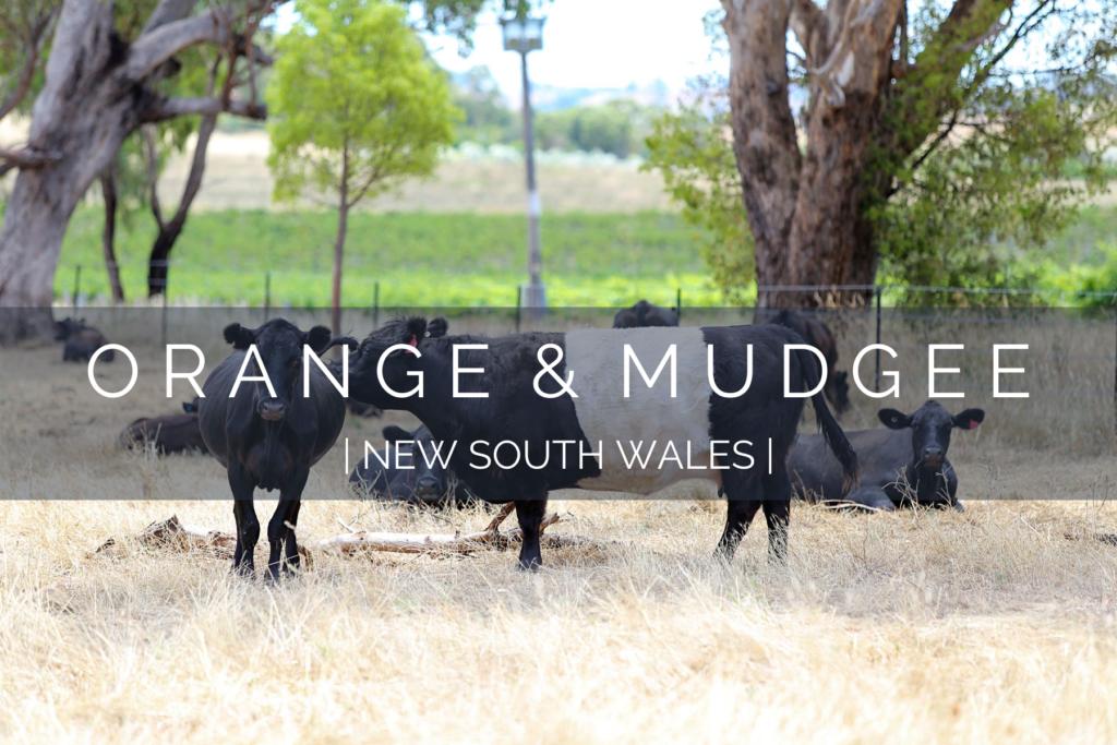 dog-friendly-orange-mudgee
