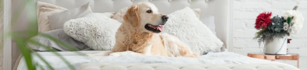 dog-friendly-sydney-hero