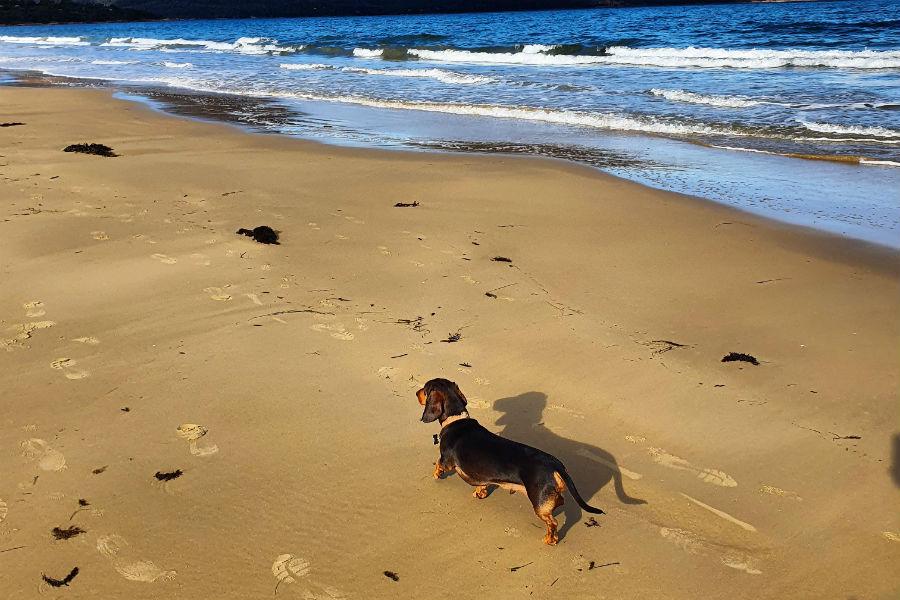 https://pupsy.com.au/wp-content/uploads/2020/10/Muirs-Beach-Coles-Bay-96.jpg