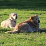 autumn mist dog friendly accommodation 7 150x150