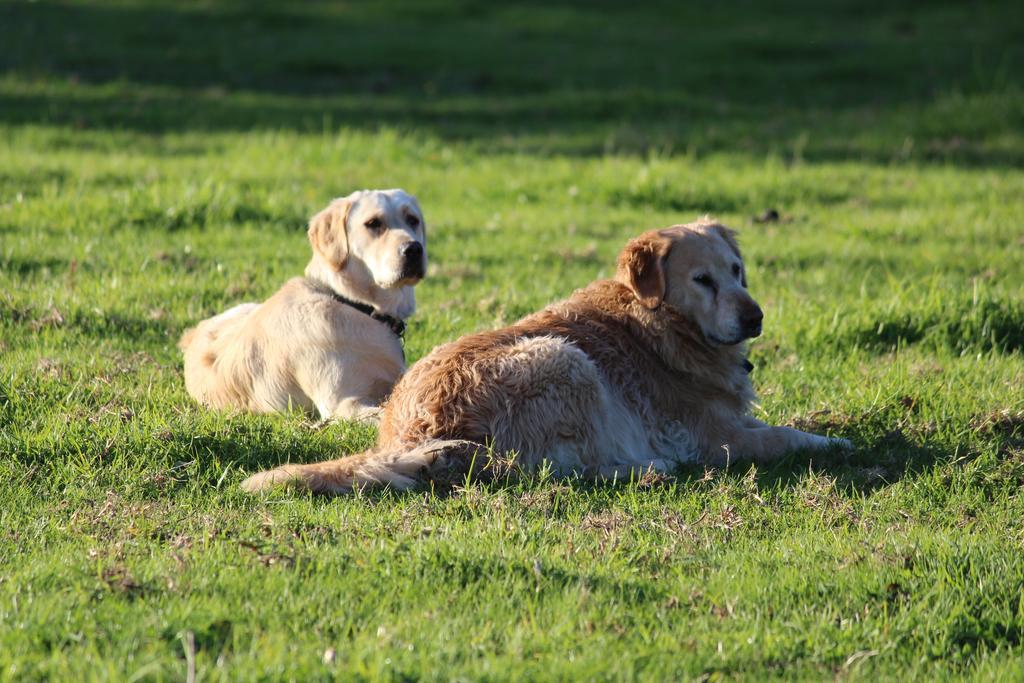 autumn mist dog friendly accommodation 7