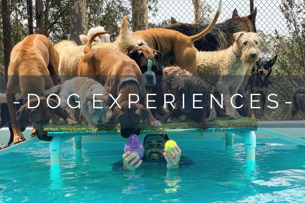 DOG-EXPERIENCES-HOME