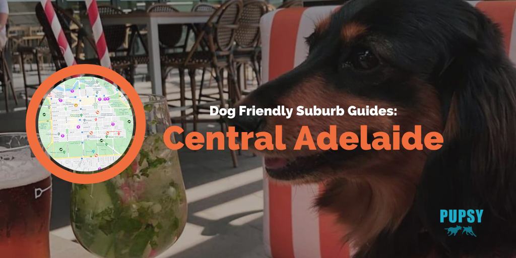 Dog Friendly Central Adelaide