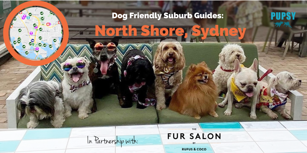 Dog-Friendly-North-Shore-Sydney-The-Fursalon