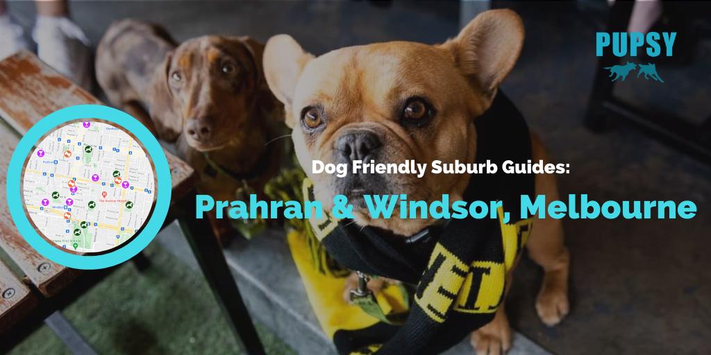 Dog-Friendly-Prahran-Windsor