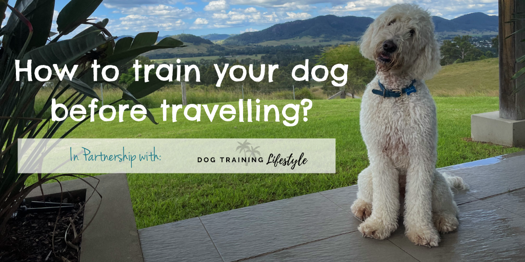 How to train your dog before travelling Hero