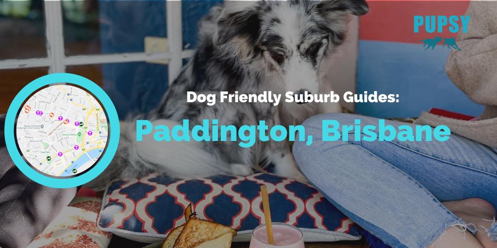 Dog-Friendly-Paddington-Brisbane