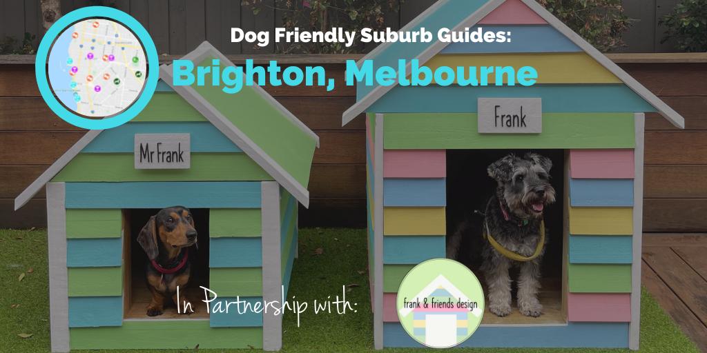 dog-friendly-brighton-melbourne-hero