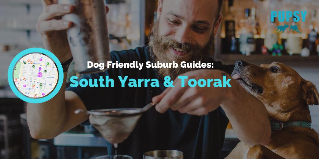 dog-friendly-south-yarra-toorak